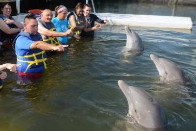 Using hand signals to communicate with dolphins.